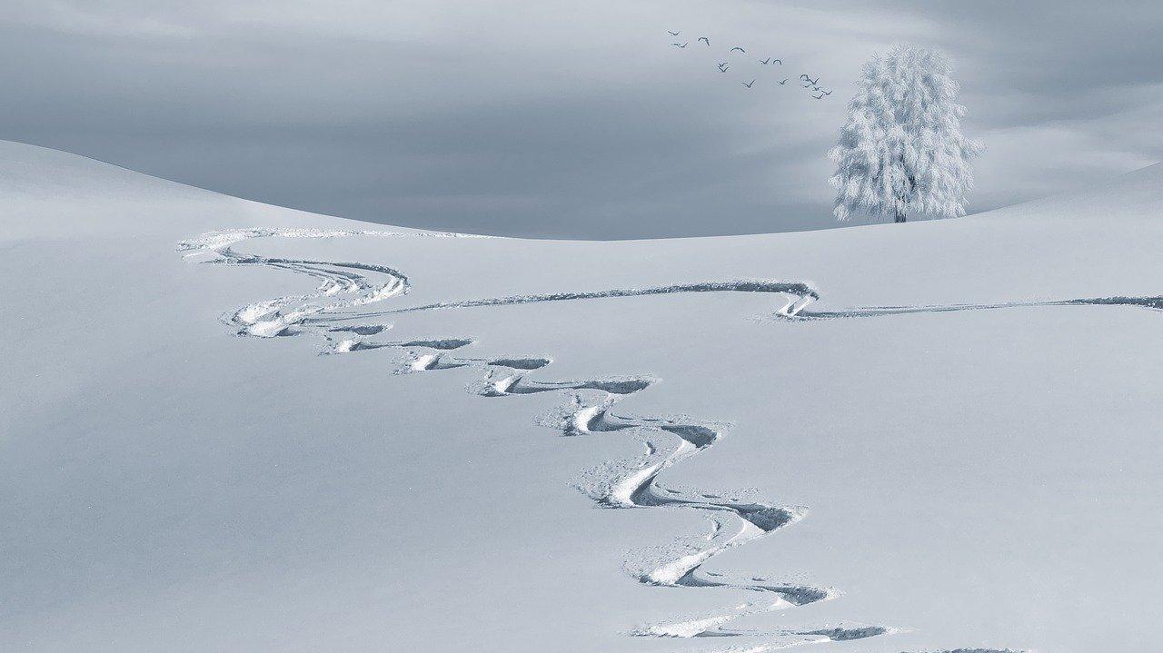 Davide Bendotti e Federico Pelizzari in gara in Austria nei campionati austriaci di sci alpino - Featured image